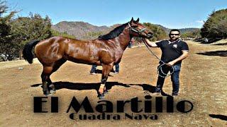 EL MARTILLO - AARON CHAVEZ Y SUS TAPADOS