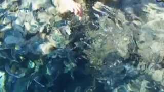 видео Курорты Египта на Красном море