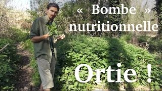 "Jus d'ortie, la ""bombe"" nutritionnelle du printemps - www.regenere.org"