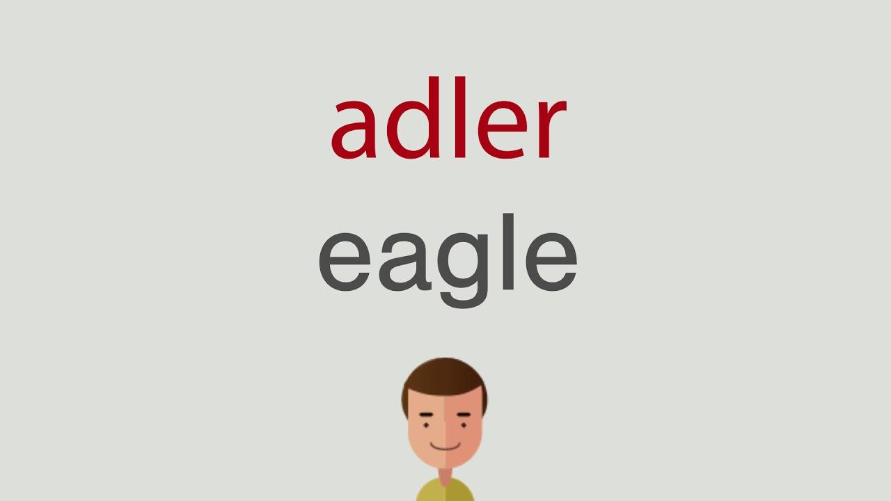 Adler Englisch