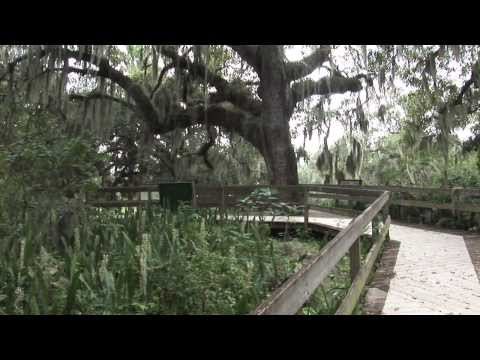 Preserves of Manatee County featuring Emerson Point Preserve: Manatee County Government