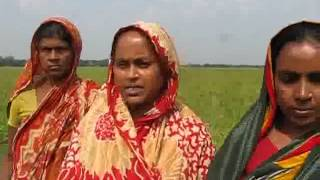 Folk Rice Conservation at Delduar of Tangail District, Bangladesh