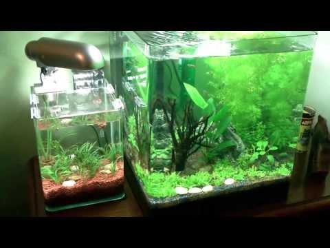 Nano Cube dennerle 60 L Aquarium V3