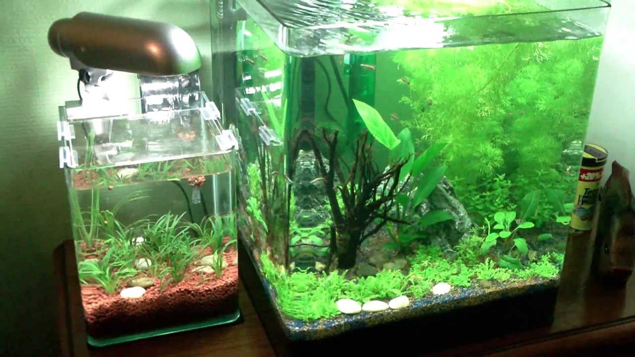Nano cube dennerle 60 l aquarium v3 youtube for Aquarium nano cube