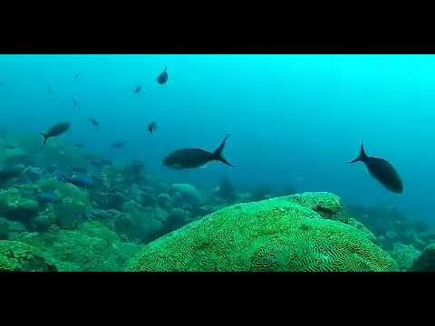 Ecosystem Services of the Ocean