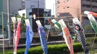 鯉幟 鯉のぼり こいのぼり コイノボリ  KOINOBORI carp