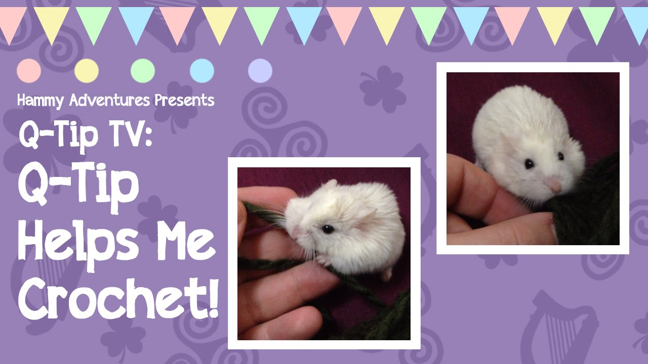 Cute Hamster Helps Her Human Crochet Youtube