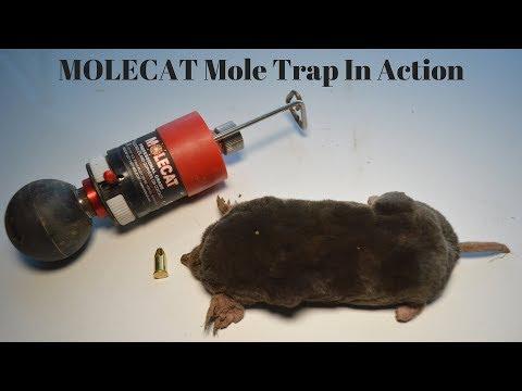 The MOLECAT