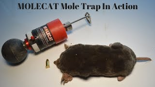 "The MOLECAT ""Bunker Blaster"" Mole Trap In Action."