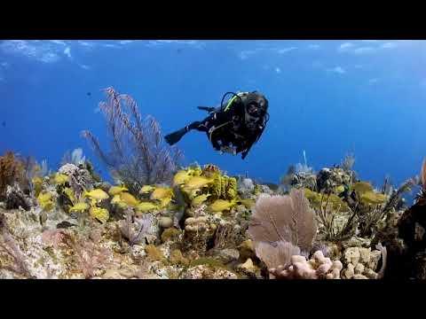 Cayman Islands: Mixing Bowl Reef Little Cayman