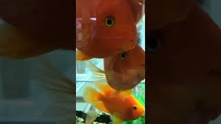 Рыба. Документальный фильм. #Fish #Goldfish #Goodfish #Softish #рыба