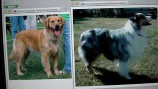 Golden Retriever Euthanized After Killing Owner