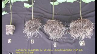 Root Systems Basics