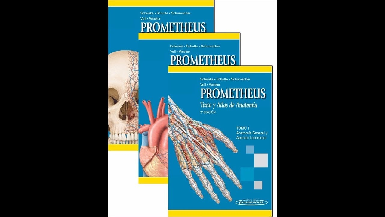 Descarga Libros de Anatomía de Prometheus Sin Anuncios en PDF - YouTube
