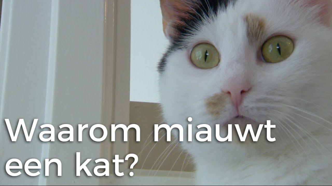 Download Waarom miauwt de ene kat meer dan andere?   Vragen van Kinderen