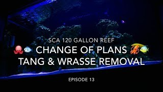 SCA 120 Gallon Reef | Ep.13 | 🐙🐟 Change of Plans 🐡🐠 - Tang & Wrasse Removal