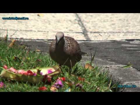 Bali Birds Nusa Dua