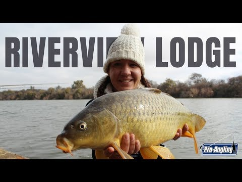 Bank Angling: Friendly Competition At Riverview Lodge.