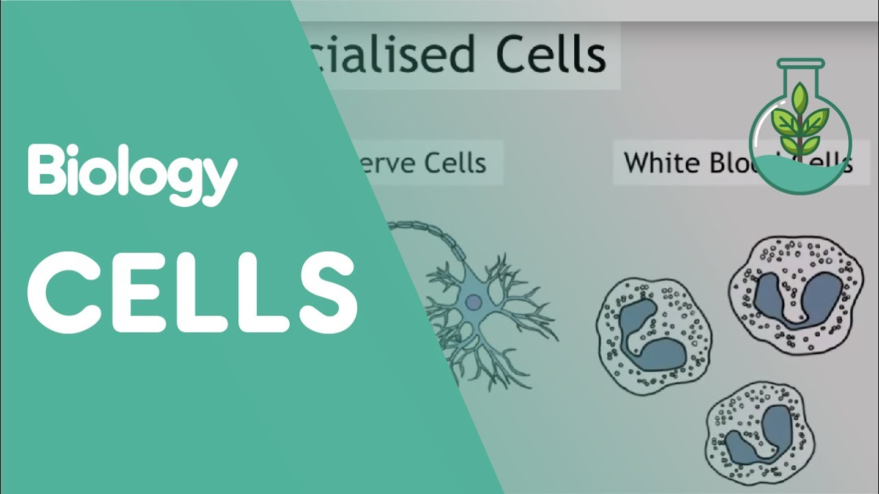 Intro To Cells Animals Plants Biology For All Fuseschool Red And White Blood Cell Diagram Of