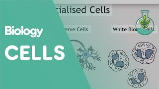Intro to Cells: Animals & Plants | Biology for All | FuseSchool