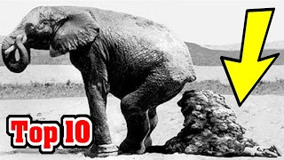 Top 10 STRANGEST Ways People Have Died