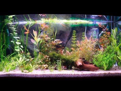 How to Clean a Fish Tank Filter | Aquarium Care