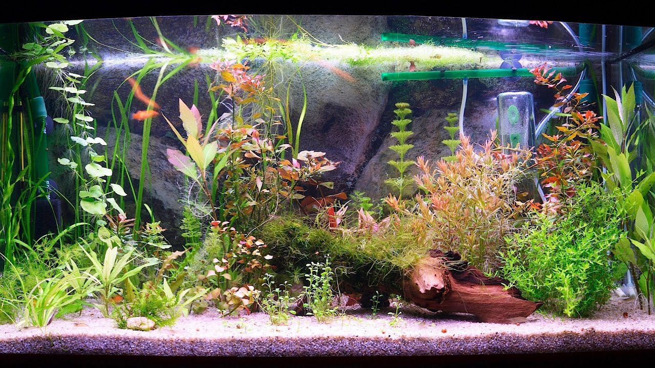 How to clean a fish tank filter aquarium care youtube for Youtube fish tank