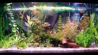 how to clean a fish tank filter   aquarium care
