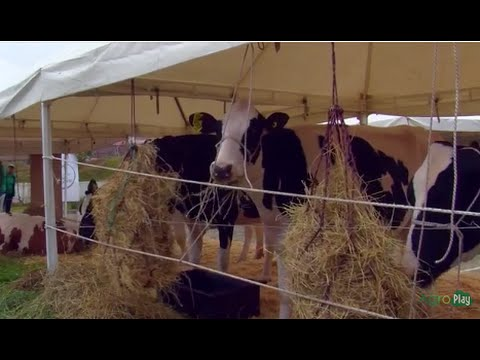 Technical Conferences for Bovine Dairy and Beef Production - TvAgro by Juan Gonzalo Angel