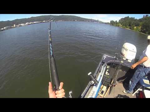 Sturgeon Fishing on the Willamette River