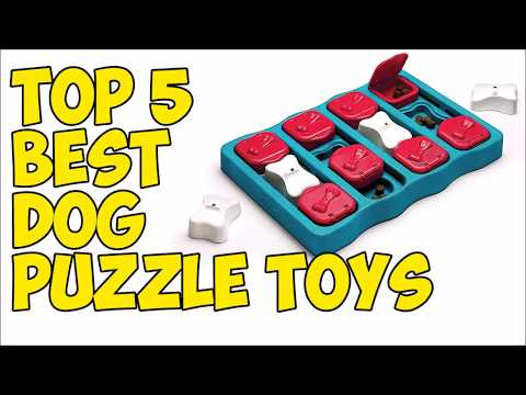 top-5-best-dog-puzzle-toys-in-2020-👍
