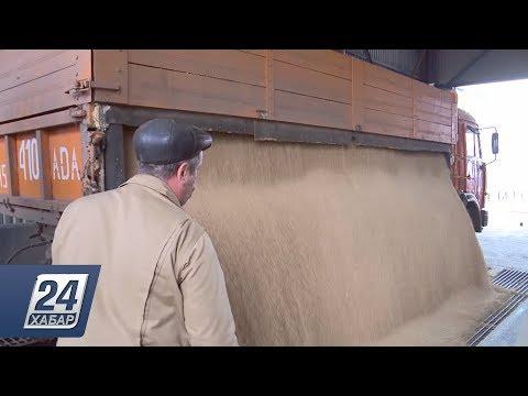 Экспортеры зерна подписали обращение к Президенту Казахстана