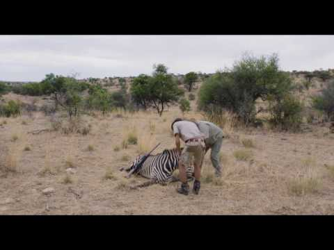 Trailer de Safari en HD