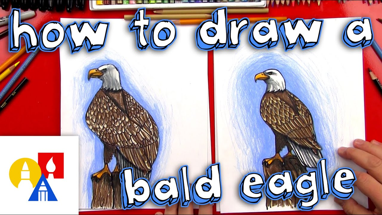 How To Draw A Realistic Bald Eagle Youtube