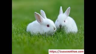 Giải mã giấc mơ thấy con thỏ là điềm gì, đánh con gì, tốt hay xấu - susucaokhoe