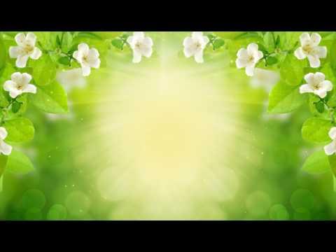 Кора для орхидей - Комнатные цветы и растения на