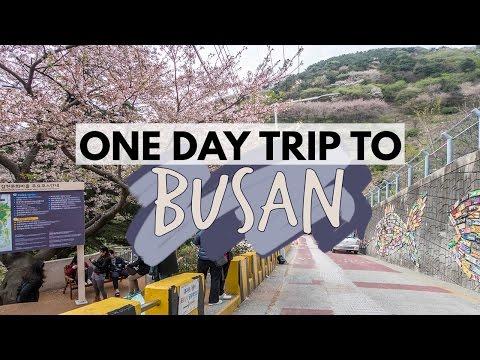 Follow Me to Busan!!   Vlog 56