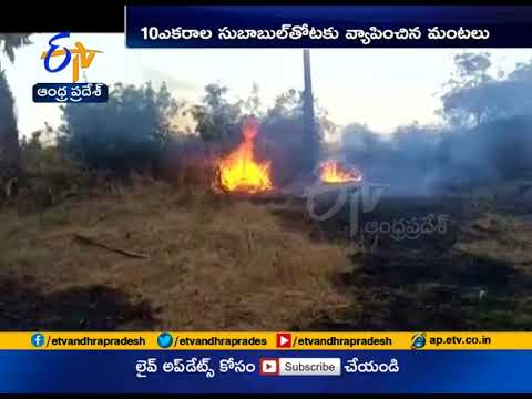 Fire Broke Out at a Jam Oil Plantation | 16 Acres Destroyed | at Krishna Dist