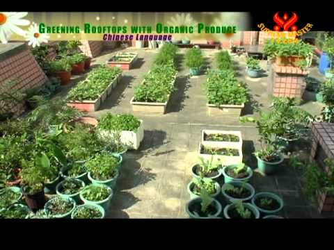 Greening Rooftops with Organic Produce