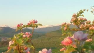 Видеосопровождение к песне Хорошо в саду(футажи, видео для монтажа и визуальное сопровождение различных мероприятий., 2017-03-01T07:26:11.000Z)