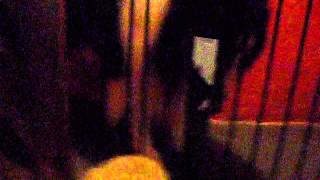 Puppy Golden Retriever X Rough Collie