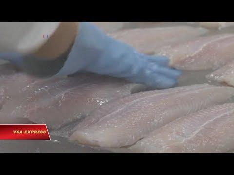 Việt Nam kiện Mỹ áp thuế cá tra