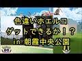 【ポケモンGO】ホエルコの巣で色違いは出るか!? in 朝霞中央公園