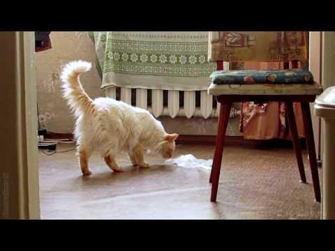 Вопрос: Орёт кот, что можно сделать Куда можно обратиться?