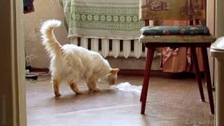 Кот орет.