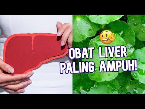 obat-liver-mujarab-menggunakan-daun-pegagan-dan-cara-mengolahnya