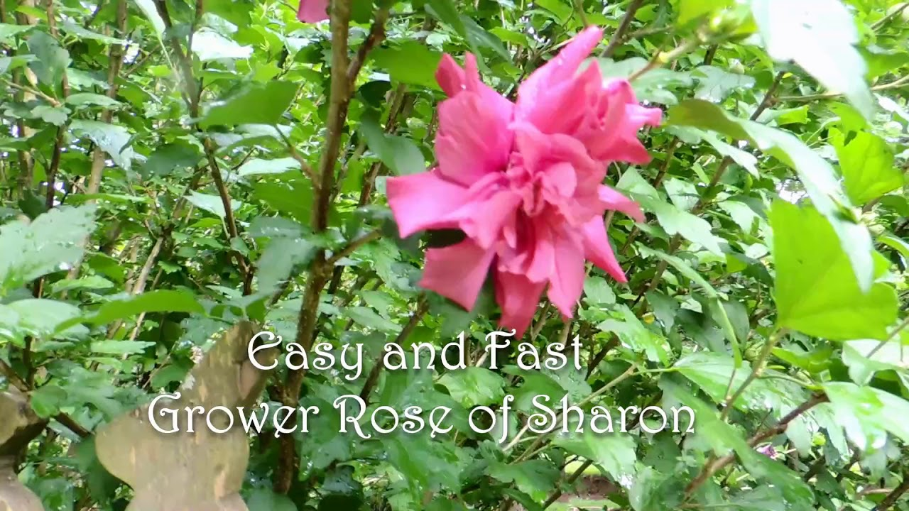 Easy To Grow Perennials Bushes And Small Trees For The Cottage