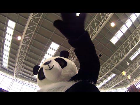 Панда отключила свет в торговом центре
