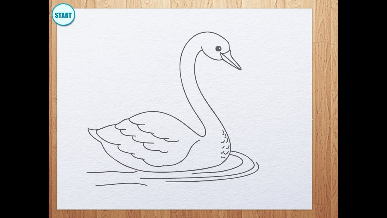 How To Draw Swan Youtube