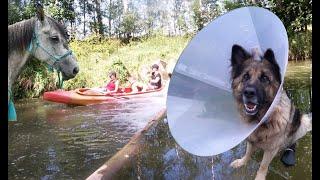 Prázdninová dobrodružství, Zranil se mi pes ?! VLOG
